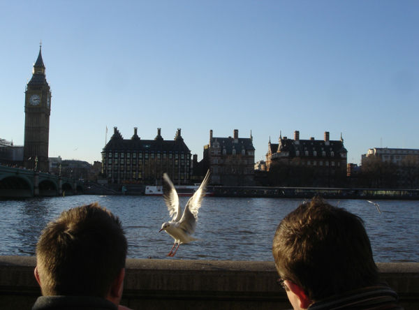 feeding mcdonald's to seagull at river thames