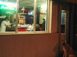 dog outside a kebab shop
