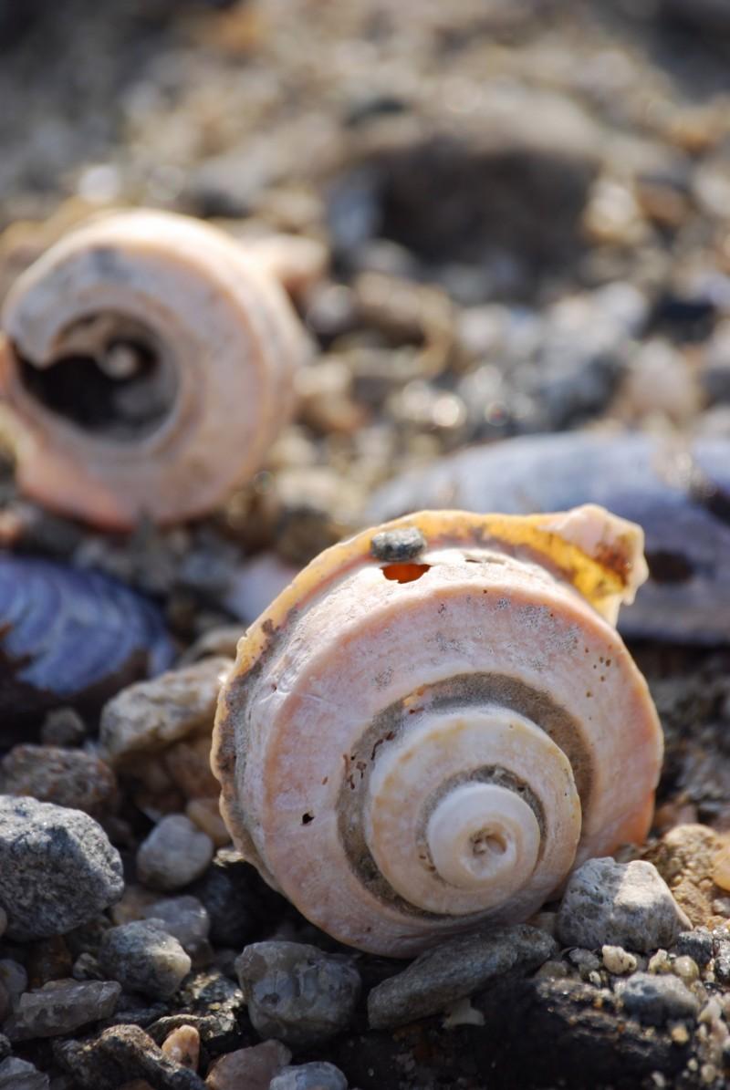 Sea Shells...