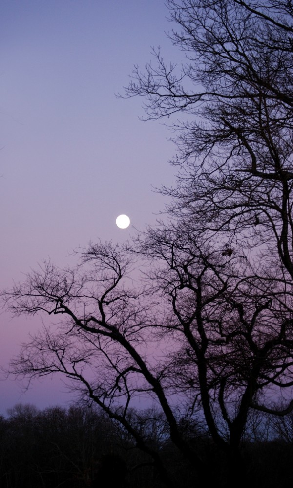 The moon rises with a purple backdrop