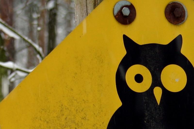One-Eyed Owl