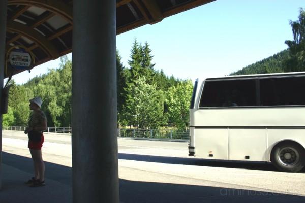 The Next Bus
