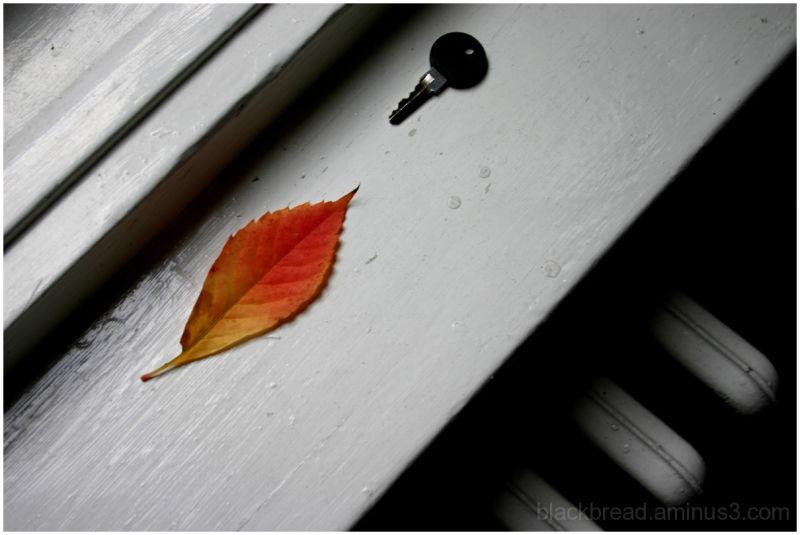 Stray Leaf