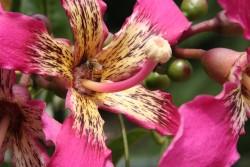 flowers on trees in bloom
