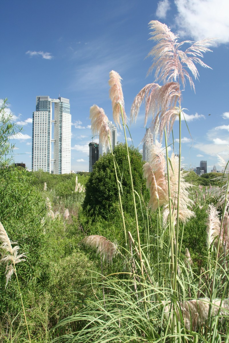 pampas grass with city view