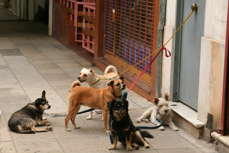 dogs waiting for the walker