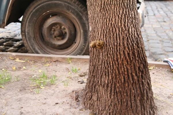 dog poop on tree