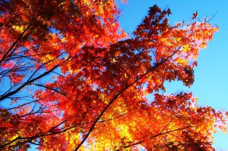 overlaid leaves