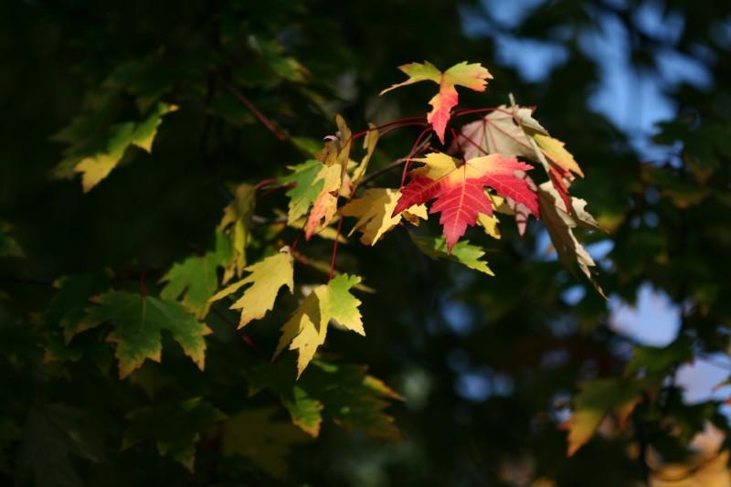a leaf emerging