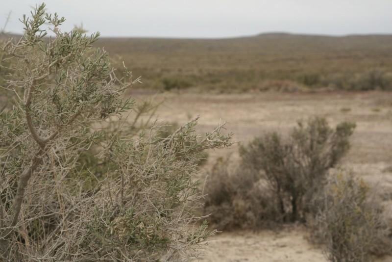 the bleak landscape of patagonia
