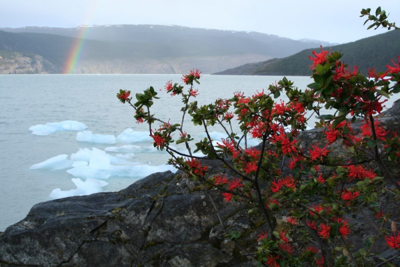 rainbow sunrise with icebergs