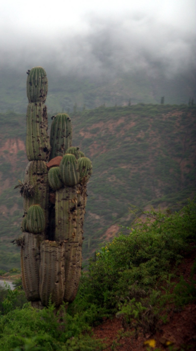 cactus and landscape
