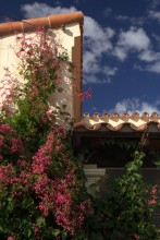 house and plants in cachi