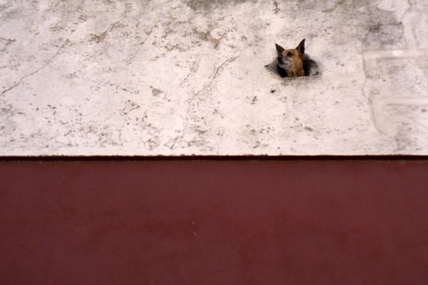 dog head in san telmo