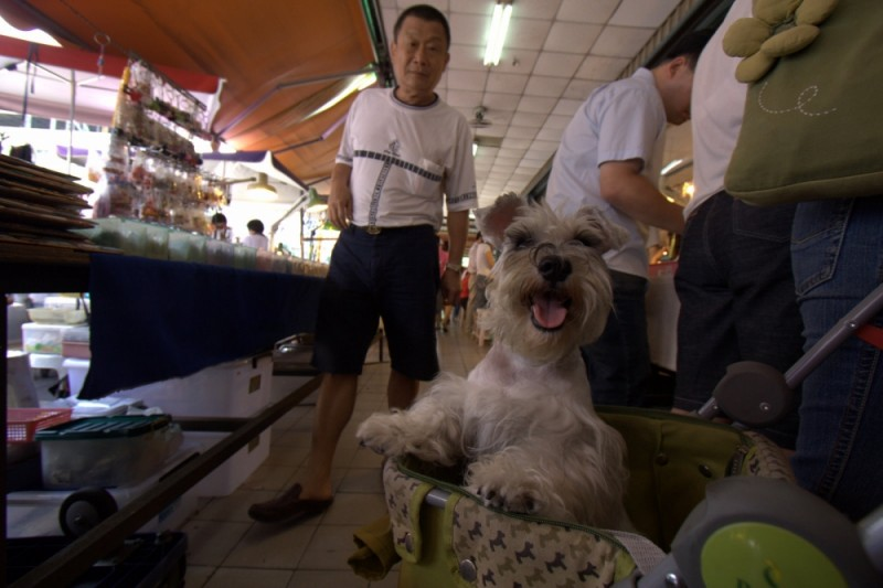 puppy at the jade market