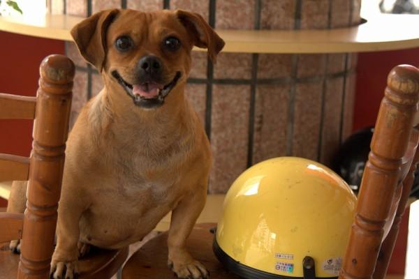 smiley dog
