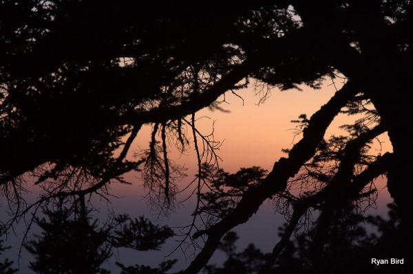tree screen