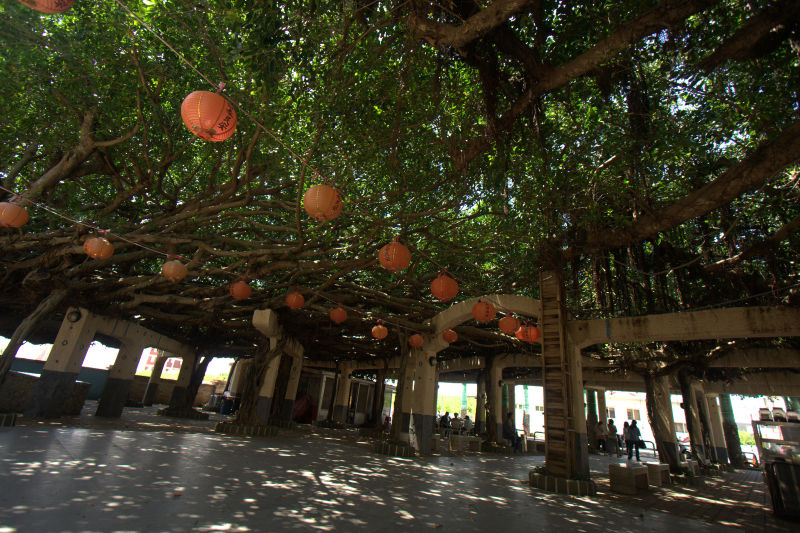 200+ year old banyan tree and temple