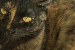 cat portrait for bark