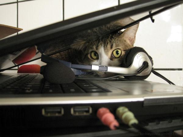 cat plays peekaboo