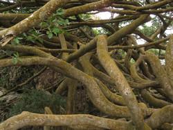many-limbed tree