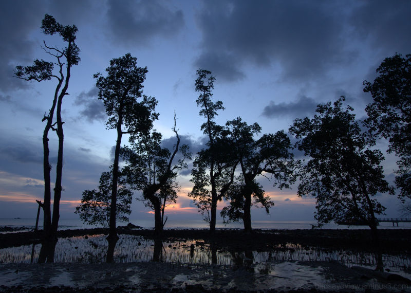 sunset trees with incoming tide