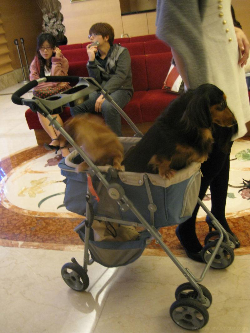 babying the dog