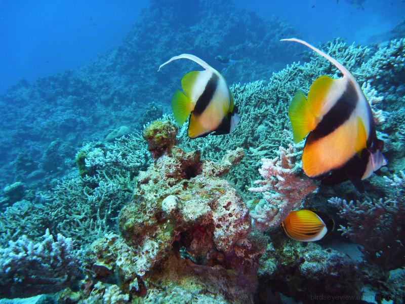 underwater in dahab
