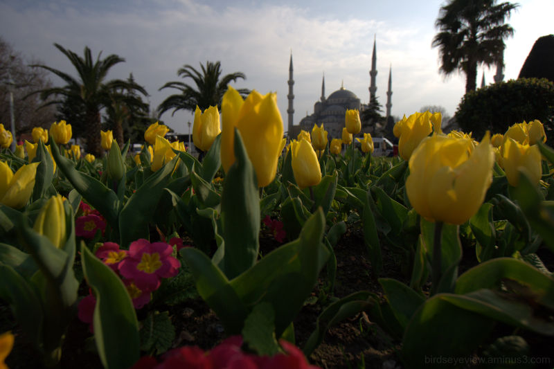 tulips and minarets
