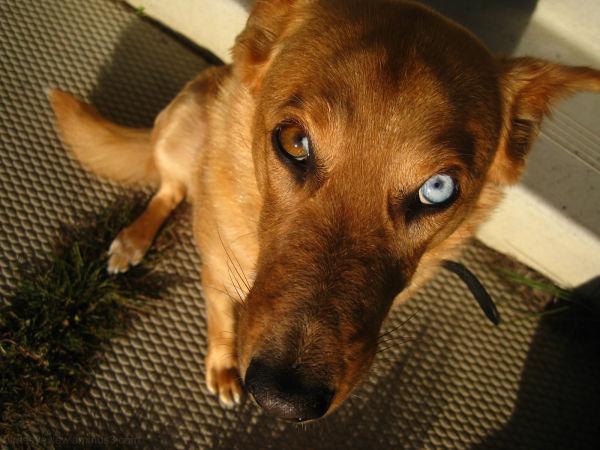 dog with weird eyes