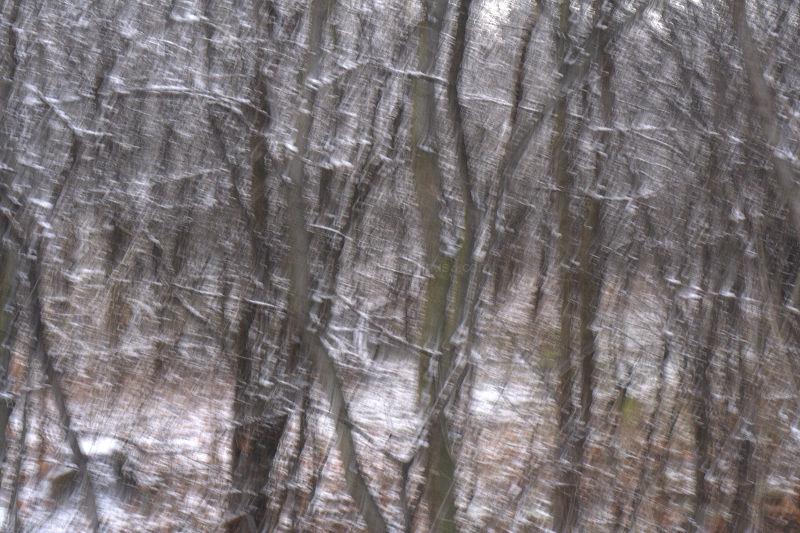 winter shake
