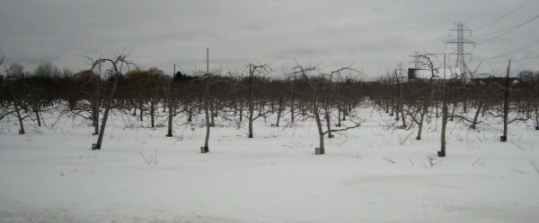 empty orchards