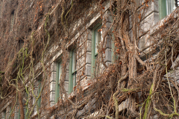 vines on a hotel