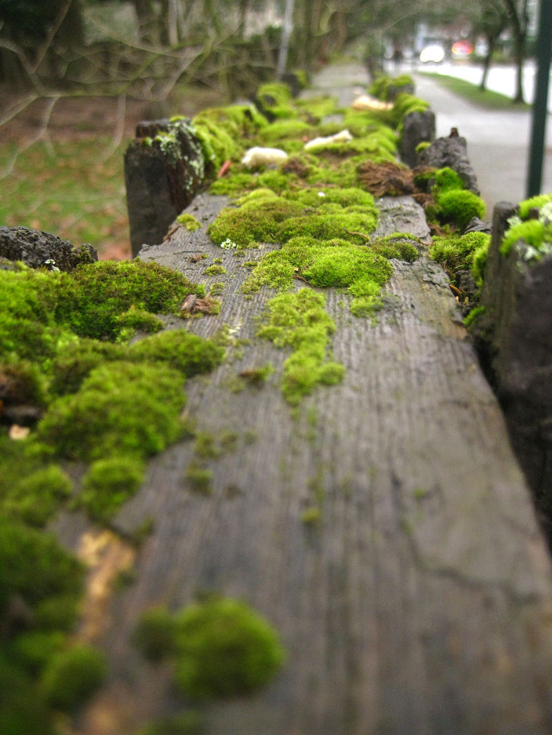 moss on the fence
