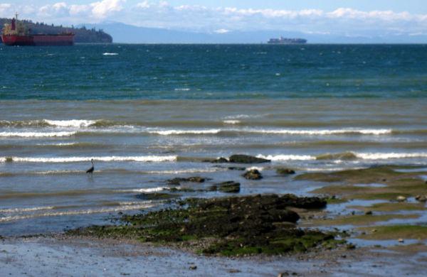 english bay with heron
