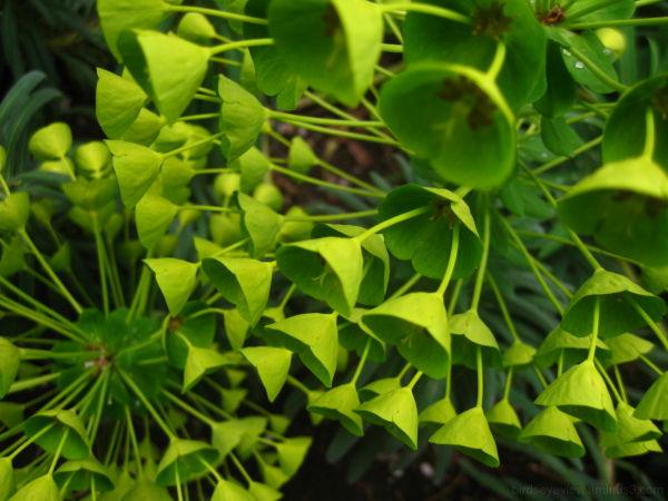 green bells