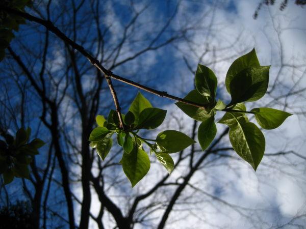 blue sky, green leaves