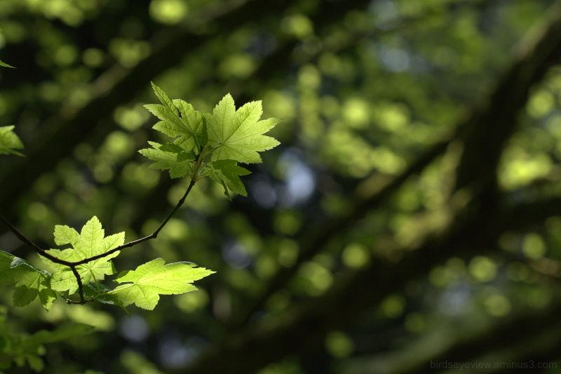 stanley park leaves