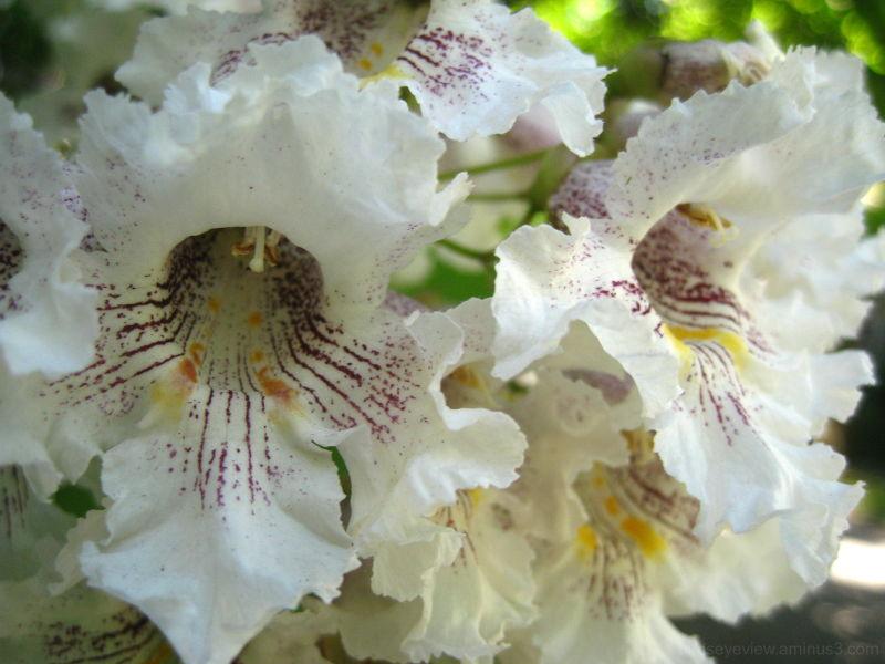 more flowering trees