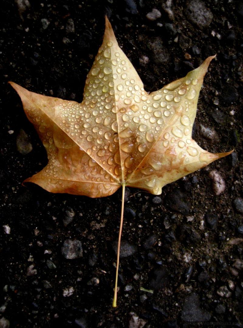 dewy leaf