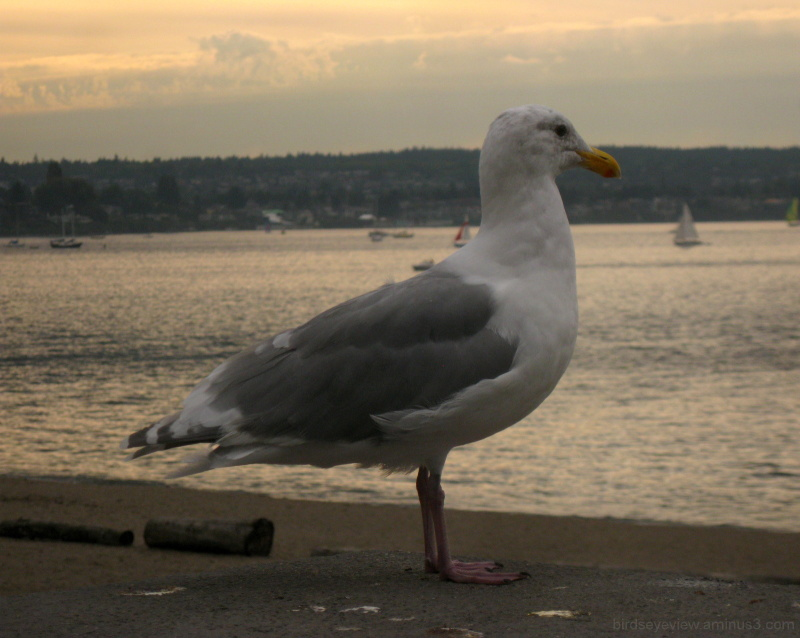 seagull on the seawall