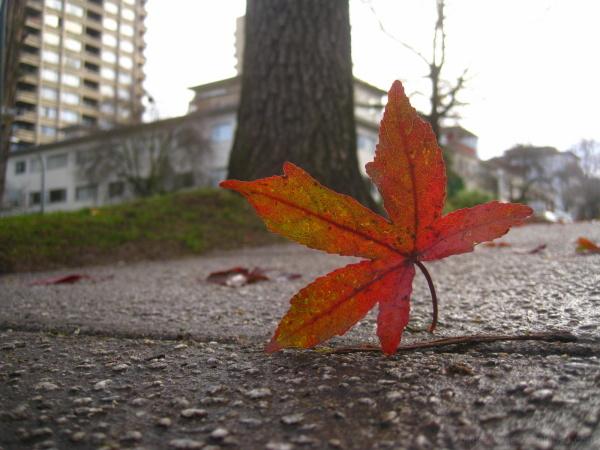 fall leaf caught