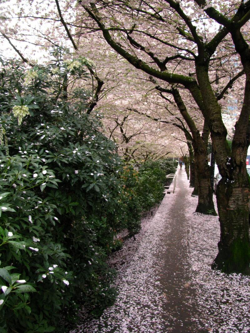 path through the petals