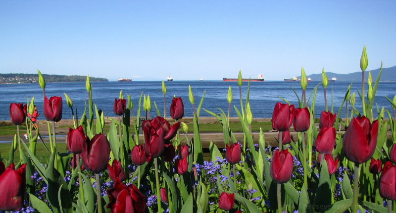 english bay with tulips