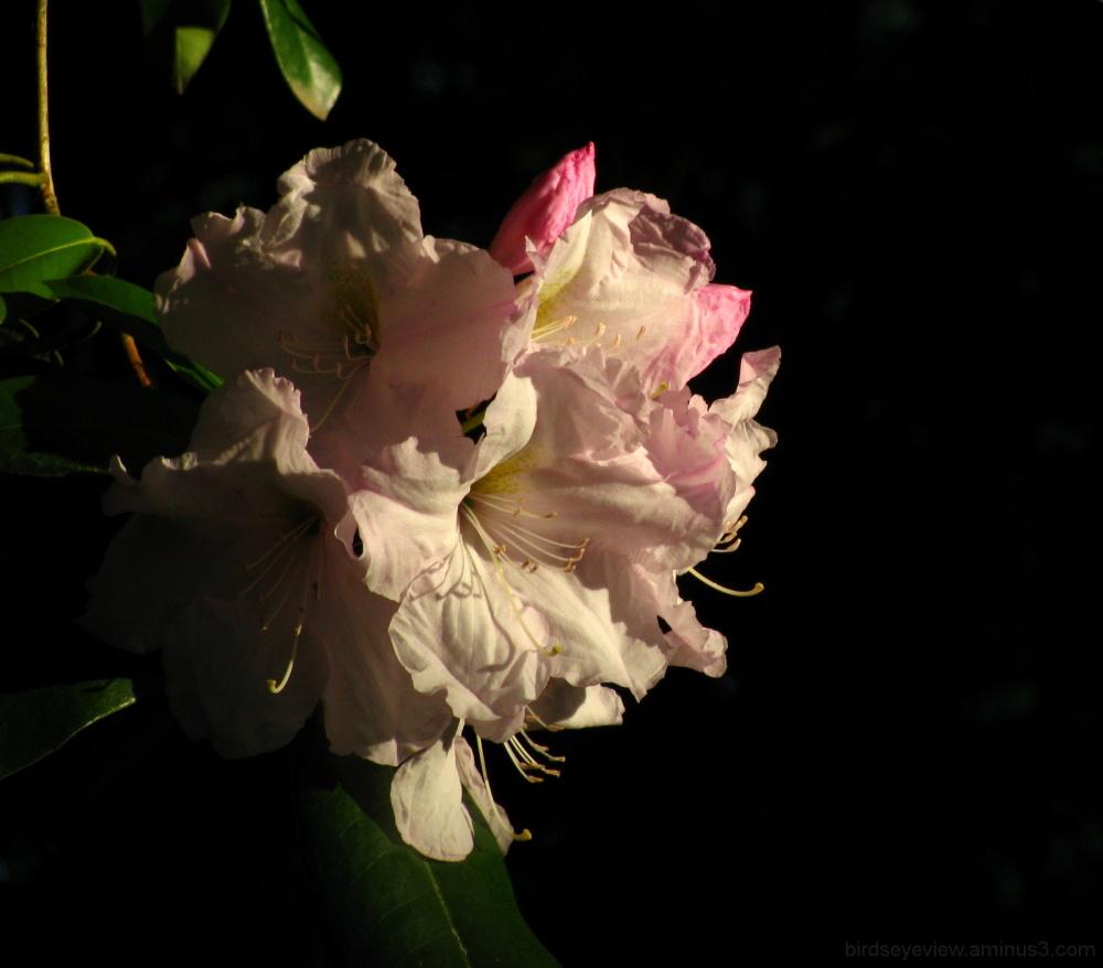 stanley park flower