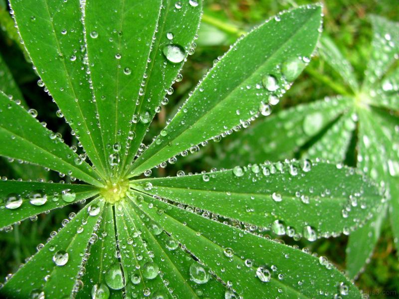 rainy plant