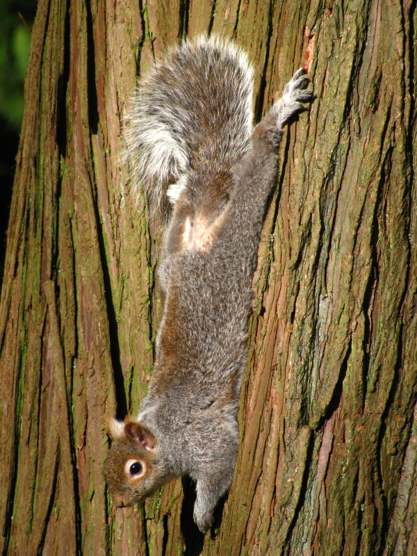 relaxing squirrel