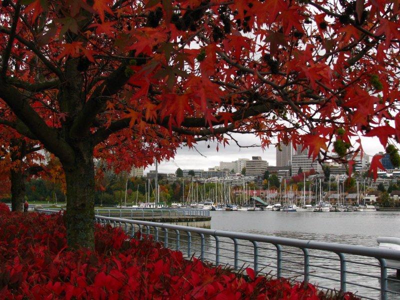 false creek autumn