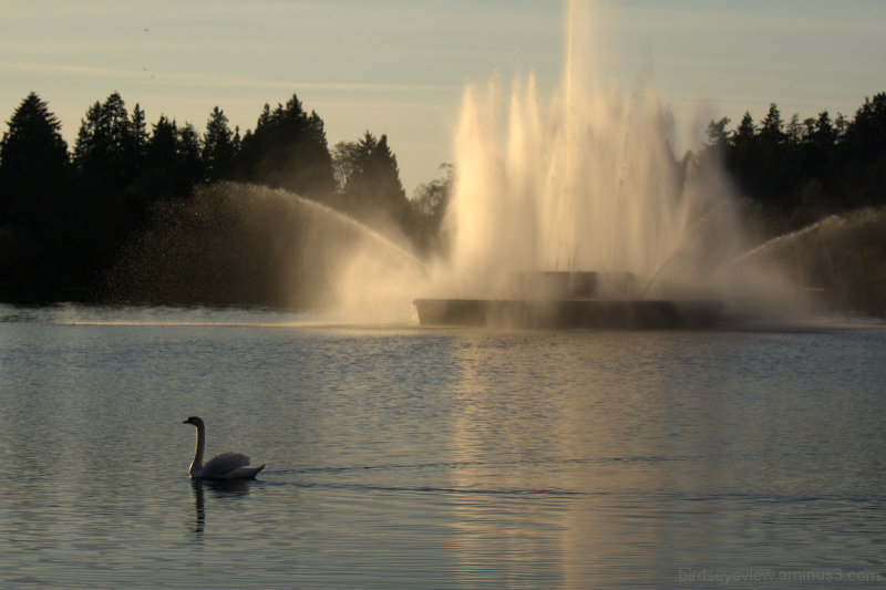 swan and fountain