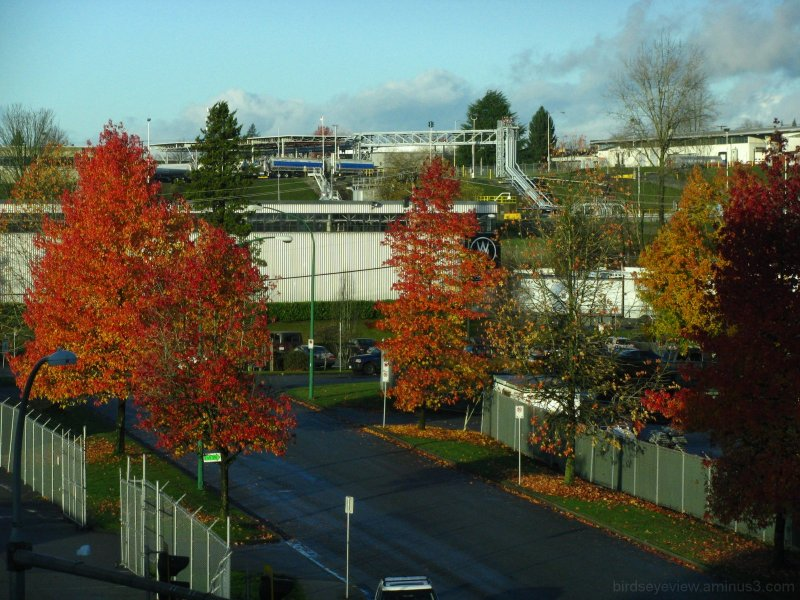 autumn leaves continue